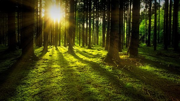 nature, forest, sun
