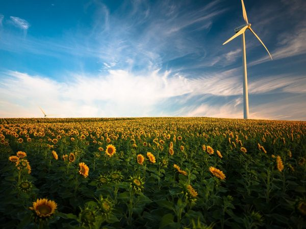 agriculture, sunflower field, wind energy