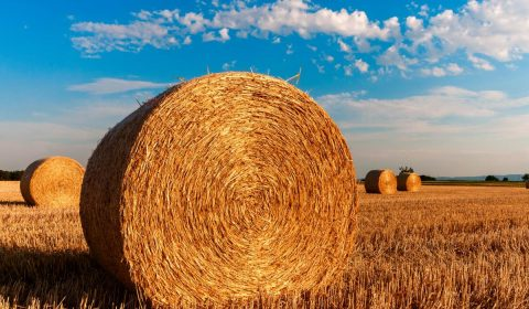 straw bales, stubble, agriculture