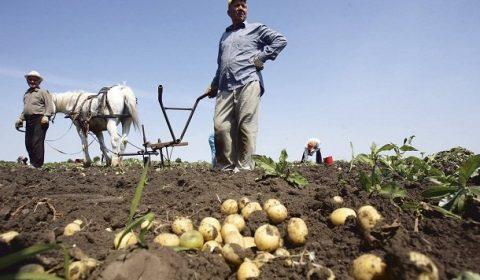 Tarani Agricultori
