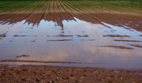 arable, field, flood