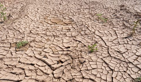 drought, cracked earth, dry earth