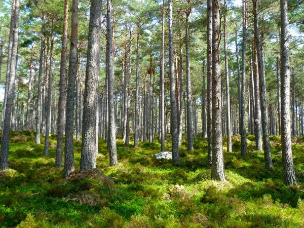 forest, trees, ecology