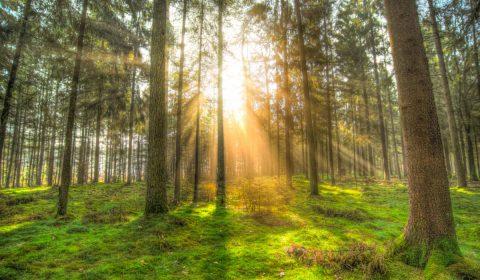 forest, sun, shadow