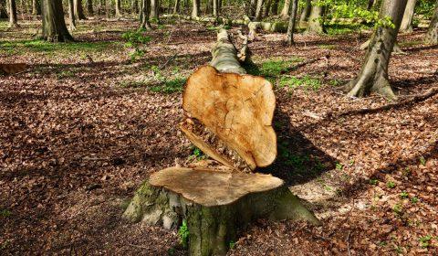log, wood, cut