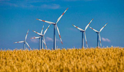 pinwheel, field, cereals
