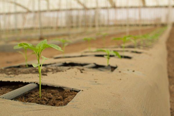 agriculture, bio, farm