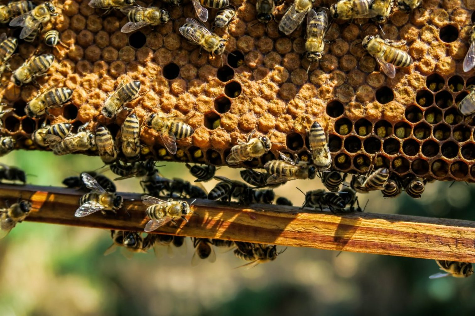 apiary, bee, beehive