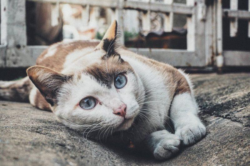 cat, feline, staring
