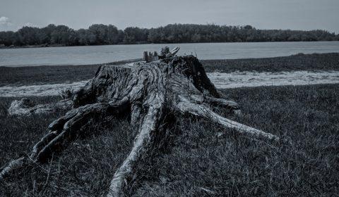 trunk, nature, environment
