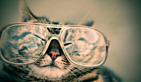 cat, glasses, eyewear
