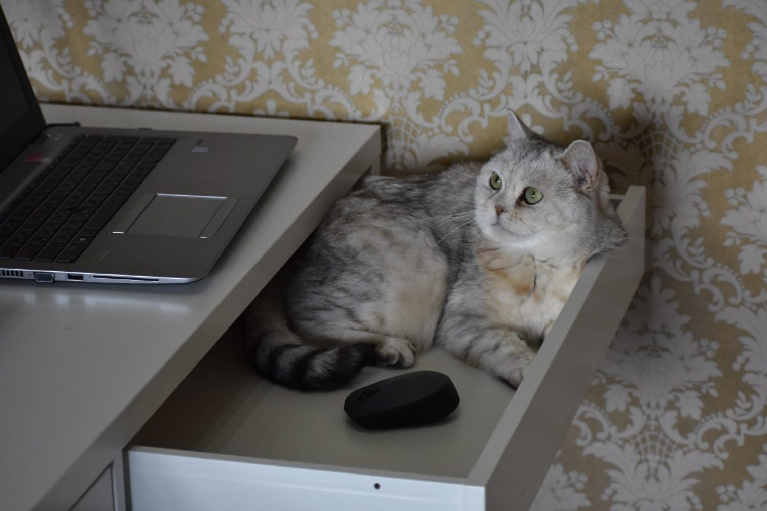 cat, vacation, furniture