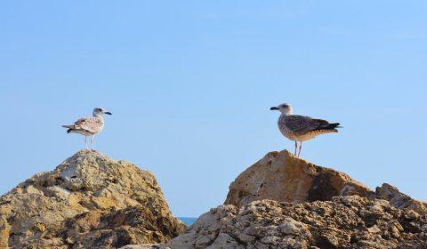 pescaruși, cliffs, cliff