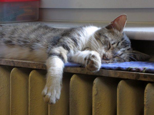 cat, sleep, radiator