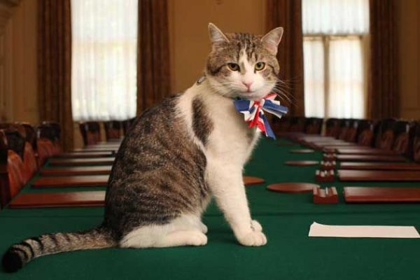Larry Chief Mouser