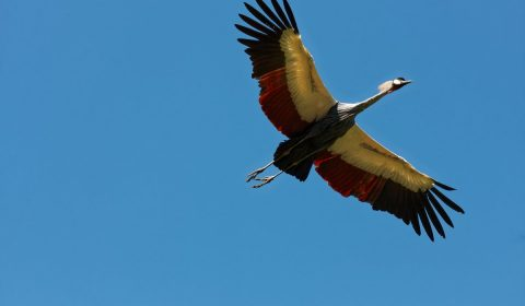 bird park walsrode, freiflug, bird