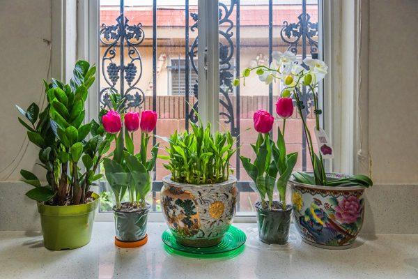 Tulips Orchid Window Flowerpot 583054 1280x854