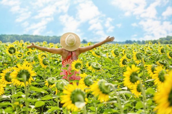 sunflowers, field, woman