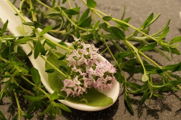 thyme, summer, herb