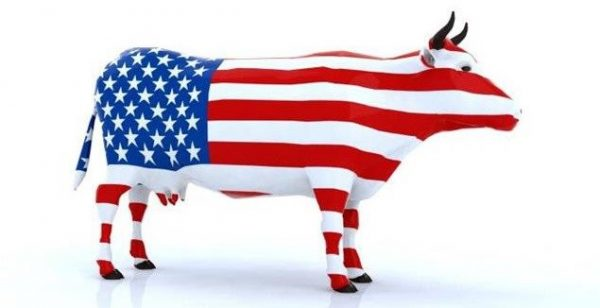 A Us Cow Export