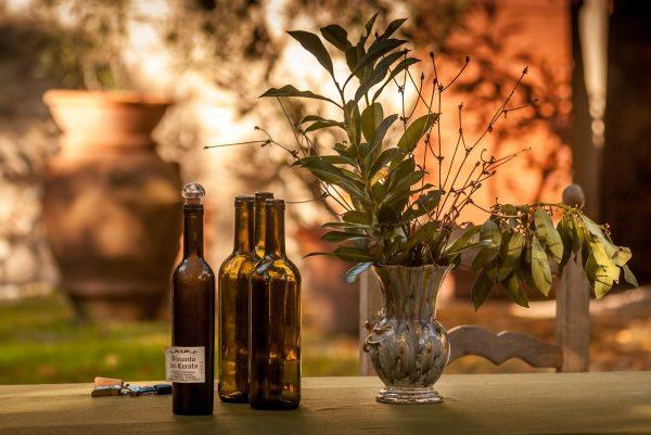 yard, vine, gardening
