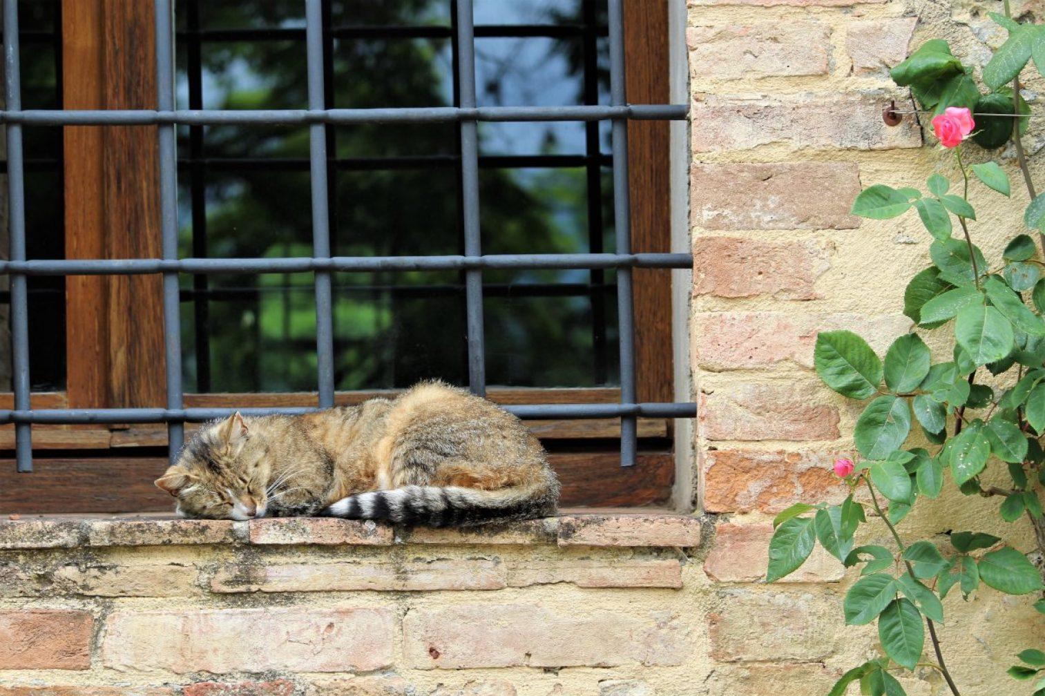 gray cat sleeping on window