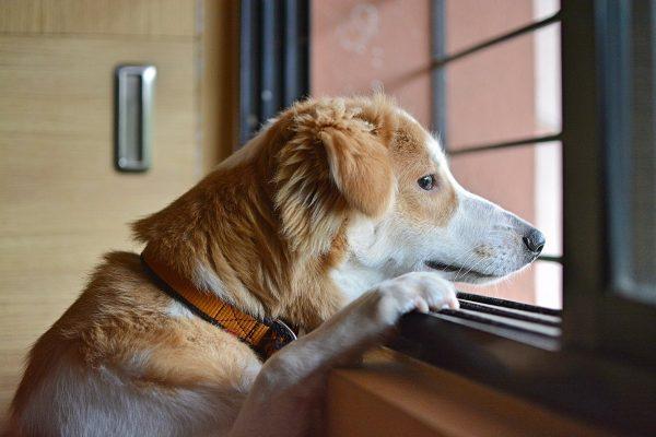 sad, dog, animal