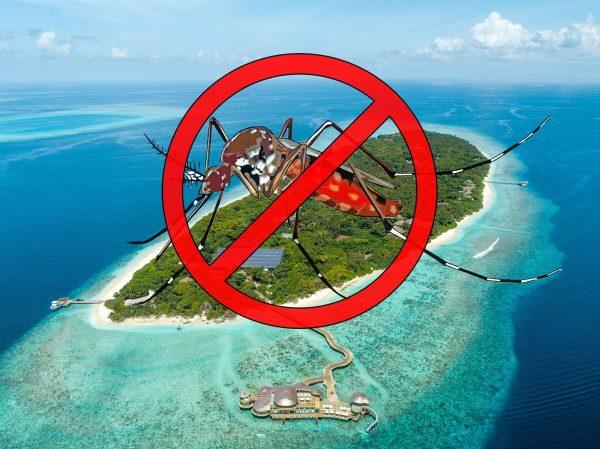țânțari Maldive