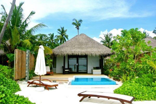maldives, coconut tree, sea