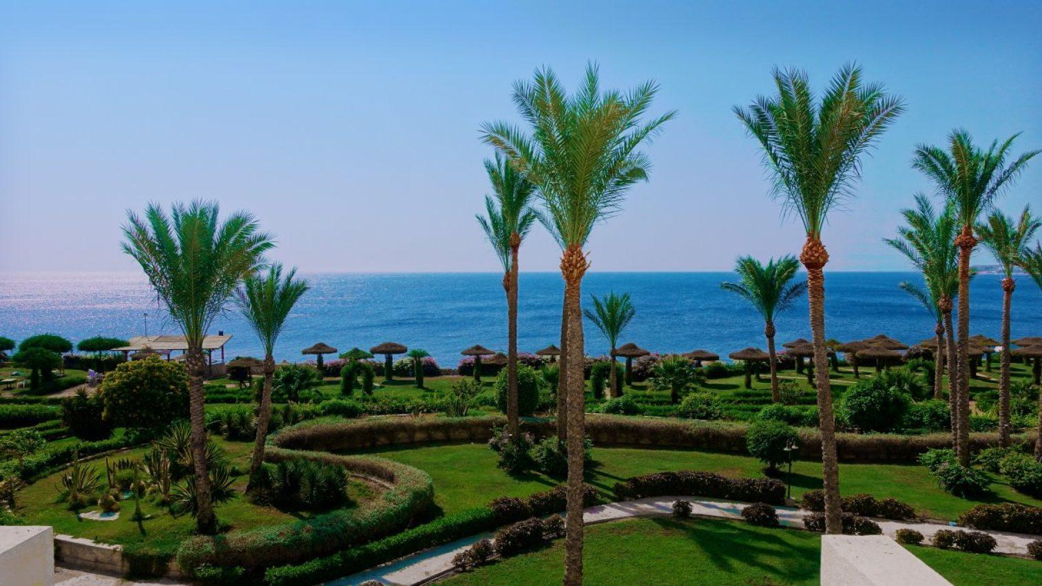 sea, egypt, palm trees